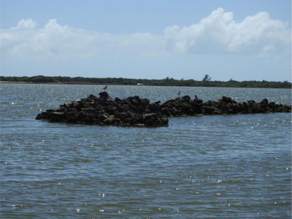 Aspecto da lagoa Salgada